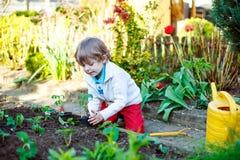 Entzückender Kinderjunge, der Samen von Tomaten pflanzt Lizenzfreie Stockfotografie