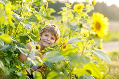 Entzückender kleiner blonder Kinderjunge auf Sommersonnenblumenfeld draußen Lizenzfreie Stockfotografie