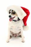 Entzückender kleiner Hund im Sankt-Hut lizenzfreies stockfoto