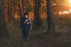 Entzückender kleiner Junge, der am Herbstwald wandert lizenzfreie stockfotografie