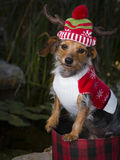 Entzückender Mischzucht-Hund in Korb-tragendem Ren-Hut Stockbild