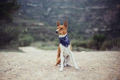 Entzückender netter Hund sitzt auf Wanderweg lizenzfreie stockfotografie