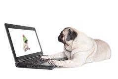 Entzückender netter Pughundewelpe, der sich hinlegt und den Laptop lokalisiert auf weißem Hintergrund betrachtet lizenzfreies stockbild