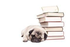 Entzückender Pughundewelpe, der sich hinlegt und nahe bei dem Stapel von Büchern, lokalisiert auf weißem Hintergrund schläft stockfotos