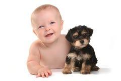 Entzückendes Baby mit seinem Haustier-Teetasse Yorkie-Welpen Lizenzfreie Stockfotos