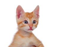 Entzückendes braunes Kätzchen Stockfoto