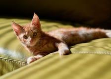 Entzückendes junges Kätzchen der getigerten Katze des roten Ingwers, das auf eine grüne Couch betrachtet die Kamera legt stockfoto