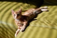 Entzückendes junges Kätzchen der getigerten Katze des roten Ingwers, das auf eine grüne Couch erforscht die Welt legt stockfotografie