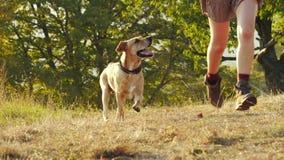 Entzückendes junges Mädchen, das Betrieb mit ihrem netten Hund auf Natur während des Sonnenuntergangs spielt stock footage