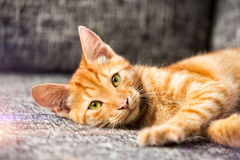 Entzückendes Kätzchen Lizenzfreie Stockfotografie