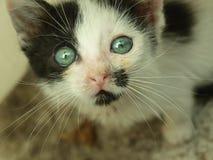 Entzückendes Kätzchen Stockfotografie
