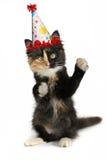 Entzückendes Kätzchen auf einem weißen Hintergrund mit Geburtstags-Hut Lizenzfreie Stockfotos