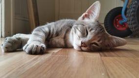 Entzückendes Kätzchen, das ein Haar hat Stockfoto