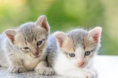 Entzückendes Kätzchen zwei Stockbilder