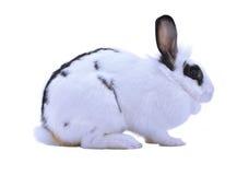 Entzückendes Kaninchen lokalisiert auf einem weißen Hintergrund Stockbild