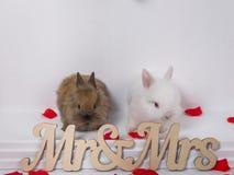 Entzückendes Kaninchen zwei auf einem weißen Hintergrund Stockbilder