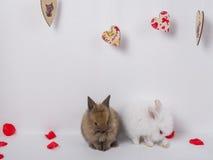 Entzückendes Kaninchen zwei auf einem weißen Hintergrund Stockfoto