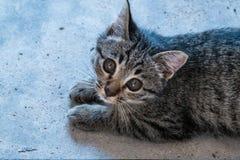 Entzückendes kleines Kätzchen stockbild