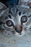 Entzückendes kleines Kätzchen stockfotos