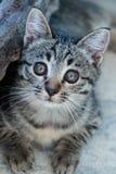 Entzückendes kleines Kätzchen stockbilder
