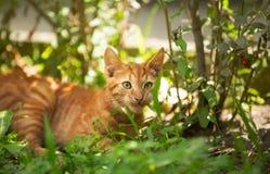Entzückendes kleines Kätzchen Stockfoto