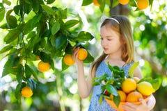 Entzückendes kleines Mädchen, das frische reife Orangen auswählt Stockbilder