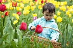 Entzückendes kleines Mädchen, das Tulpen erfasst Stockfotos
