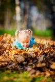 Entzückendes kleines Mädchen mit Herbstlaub lizenzfreie stockfotografie