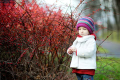 Entzückendes Kleinkind in den Berberitzenbeerebüschen am Herbsttag lizenzfreies stockbild
