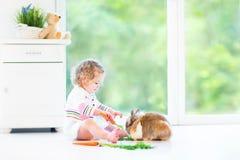 Entzückendes Kleinkindmädchen, das mit einem wirklichen Häschen spielt Stockfotografie
