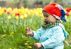Entzückendes Kleinkindmädchen, das Tulpen im Garten erfasst Lizenzfreies Stockbild