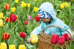 Entzückendes Kleinkindmädchen, das Tulpen im Garten erfasst Stockfotos