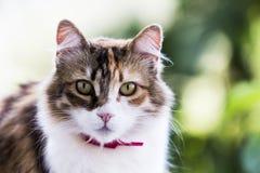 Entzückendes Porträt einer neugierigen dreifarbigen weiblichen Katze mit starkem grünem bokeh Effekt lizenzfreie stockbilder