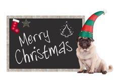 Entzückendes Pughündchen, das einen Elfenhut, sitzend nahe bei Tafelzeichen mit frohen Weihnachten des Textes, auf weißem Hinterg stockbilder