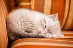 Entzückendes und schönes wenig weißes Miezekatzekatzenschlafen Stockbild