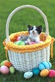 Entzückende Kätzchen in einem Feiertags-Ostern-Korb Stockbilder