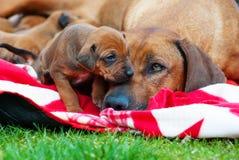 Entzückender kleiner Welpe mit seiner Mutter Stockfotografie