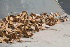 entziehen Sie Hintergrund Detail eines verlassenen Autos abgedeckt durch trockenes L Stockfotografie