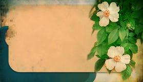 Entziehen Sie Hintergrund mit Rosen Lizenzfreie Stockfotografie