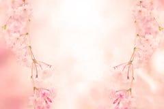 Entziehen Sie rosafarbenen Blumen-Hintergrund Lizenzfreies Stockfoto