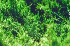 Enväxt i sommar det färgrika slutet sköt upp Royaltyfria Bilder