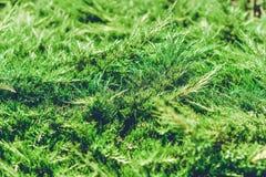 Enväxt i sommar det färgrika slutet sköt upp Fotografering för Bildbyråer