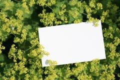 Envío de las flores Fotos de archivo libres de regalías