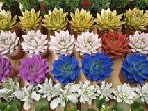 Envase suculento del alféizar del jardín del fondo del color imagen de archivo