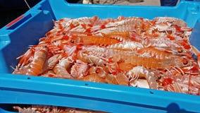 Envases azules con la captura de los camarones del mar almacen de metraje de vídeo