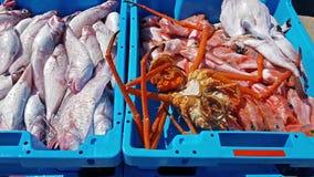 Envases azules con la captura de los pescados de mar, delicadezas metrajes