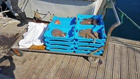 Envases azules con la captura de los pescados de mar, delicadezas almacen de metraje de vídeo