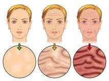Envelhecimento da pele Fotos de Stock Royalty Free