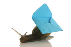 Envelope on a snail. With white background royalty free stock photo