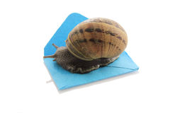 Envelope and snail. With white background royalty free stock images